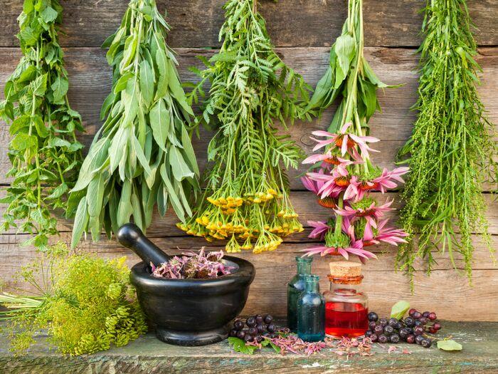 Растения силы - это особая группу растений адаптогенов, применение которых позволяет организму приспособиться к неблагоприятным факторам внешней среды.