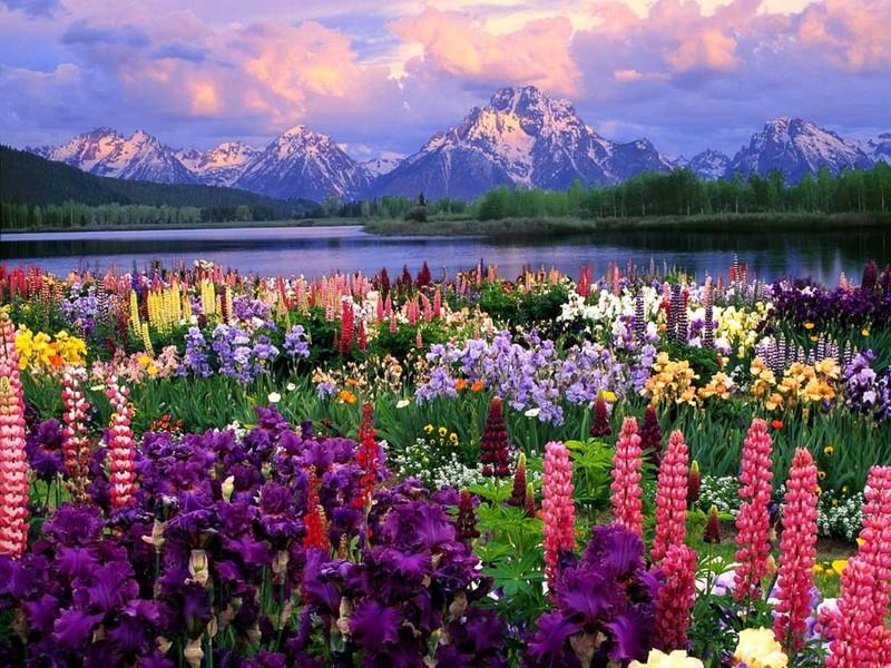 Цветы дарят свою любовь всему окружающему миру, превращаются в плоды, семена и дают новую жизнь. Станислав Милевич