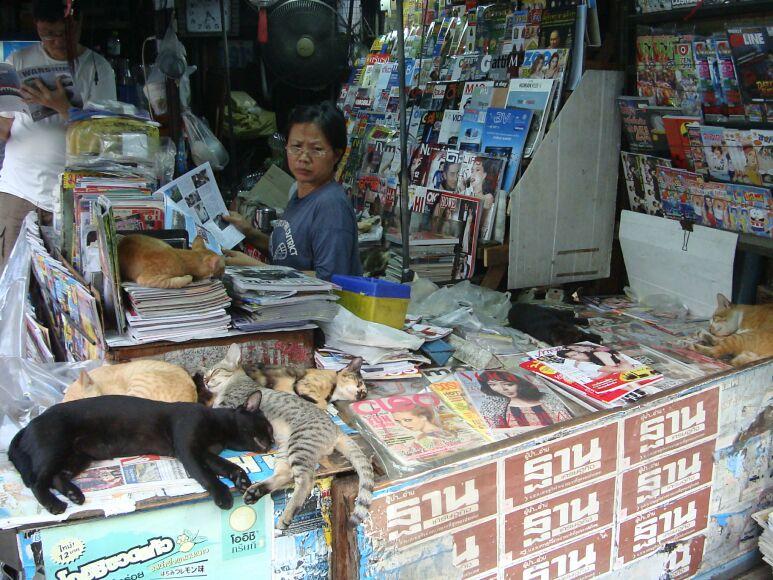 Фото кошек в Бангкоке
