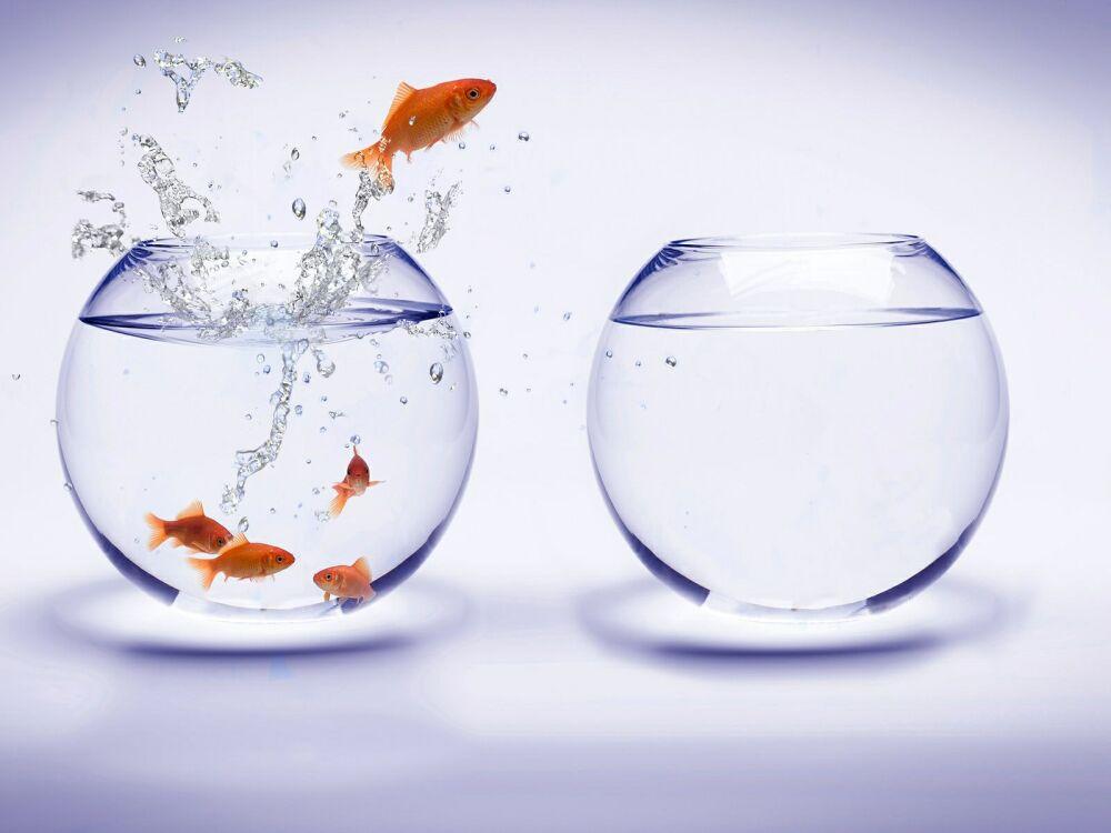 Многие не мыслят свою жизнь без цели, ищут цель человеческой жизни и страдают,  если её не находят. Но, обретя цель, порой обрекают себя на ещё большие страдания, потому что проблема цели заключена в самом желании обрести цель. Станислав Милевич