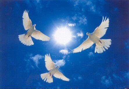 Всё, что вас окружает, есть любовь и свет. Когда вы находитесь в состоянии гармонии  и приятия они наполняют вас, проявляясь во всём. Станислав Милевич