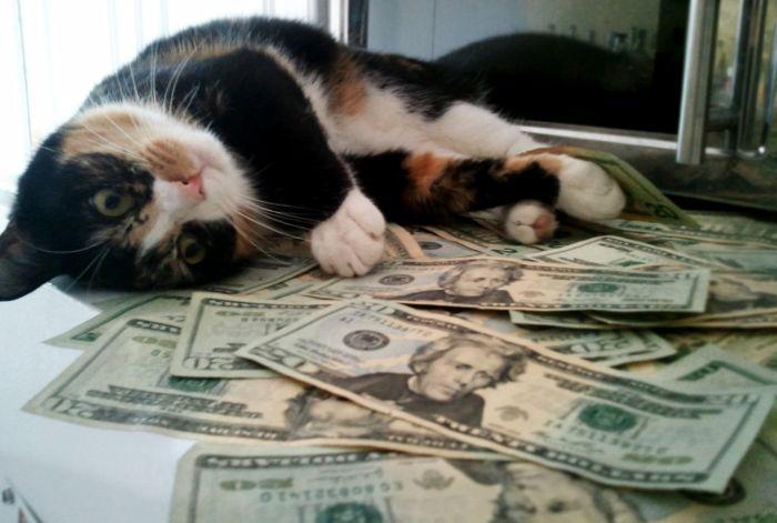 Какое должно быть отношение к деньгам, чтобы они не стали причиной зависимости? Станислав Милевич