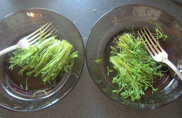 Питание проростками. Фото