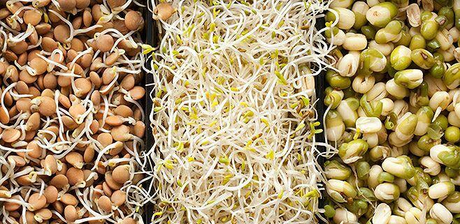 Пророщенные семена чечевицы. Фото