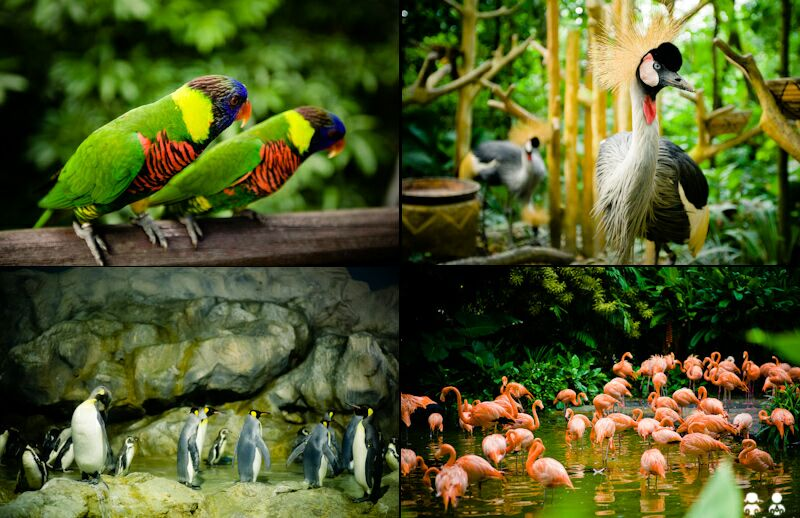 Джуронгский парк птиц. Фото