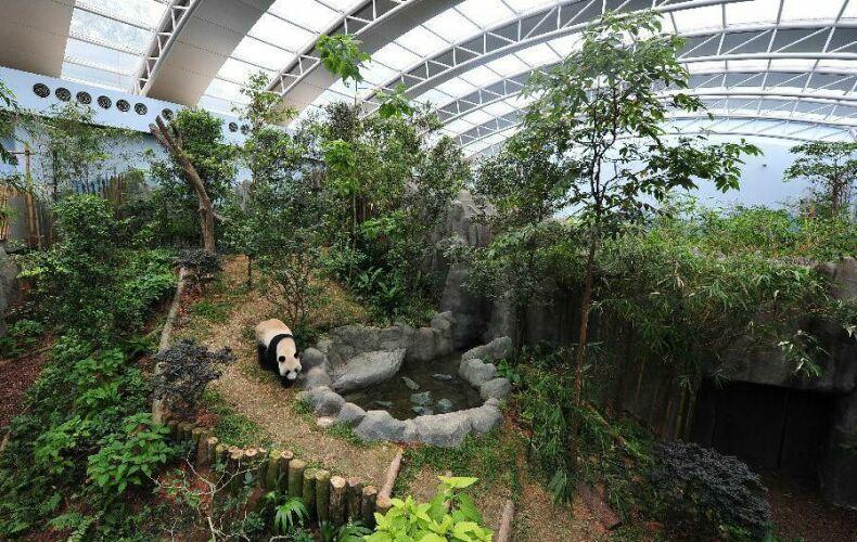 Сингапурский зоопарк Панды. Фото