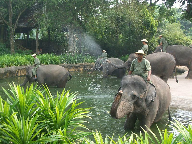 Сингапурский зоопарк. Фото