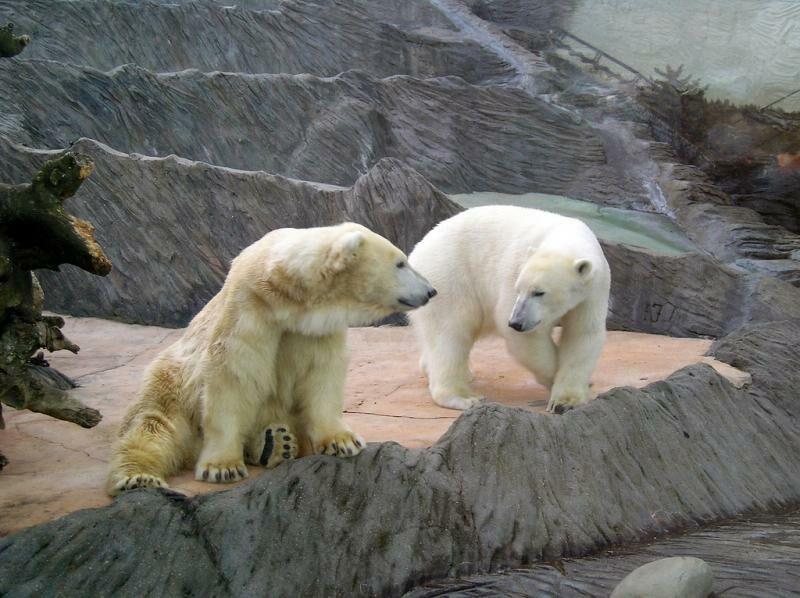 Зоопарк в Сингапуре. Фото